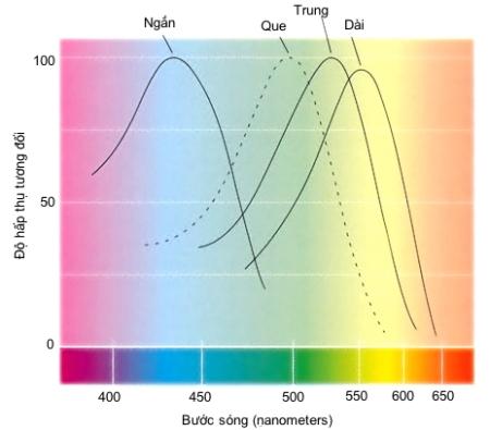 cone-spectral-sensitivitie