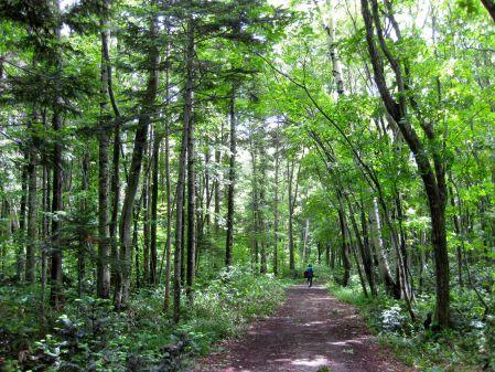 Nopporo forest