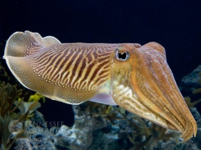 cuttlefish_800x600