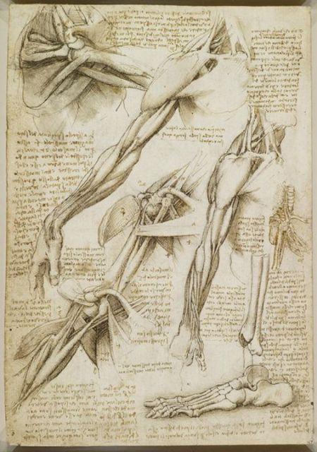 Dessin giải phẫu cơ thể người của Leonardo da Vinci